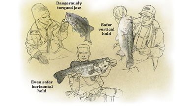 Here's some important information regarding holding trophy bass.