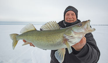 Researchers recently evaluated post-release survival of walleyes.