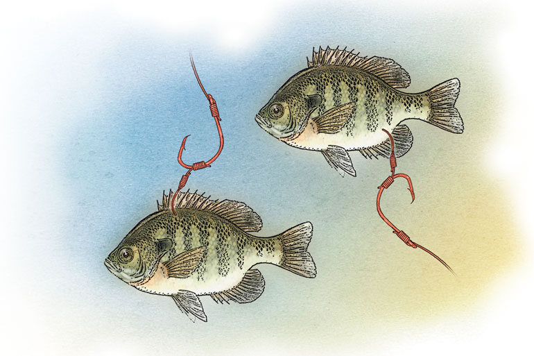 Many of these rigs and components can be scaled to match larger and smaller catfish.