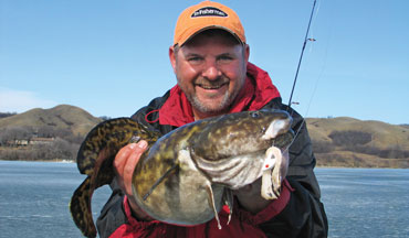 Yes the burbot or eelpout, has surged in popularity.
