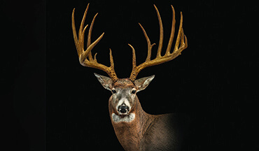 The world's number 8 typical suggests that other giant bucks await discovery.