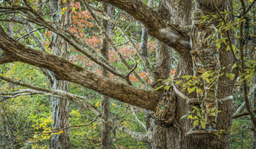 Here follows the ultimate guide for hanging bow stands for each phase of deer season.