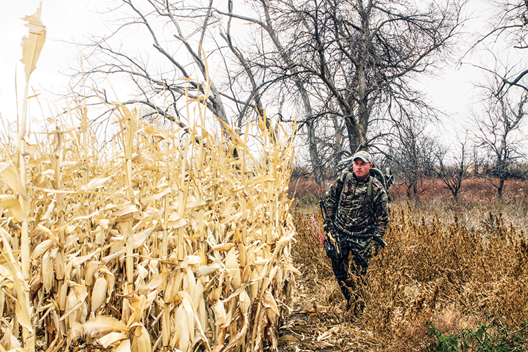 bowhunter walking along corn