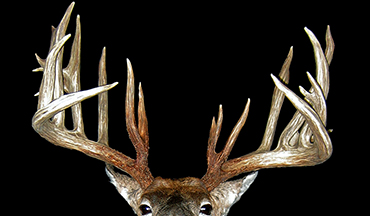 At over 250 inches, this buck went under the radar for years before more details surfaced about the irregular hunt.