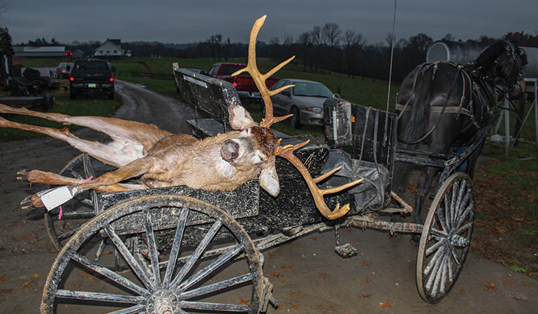 Ultra-Wide Whitetail Arrowed in Ohio Amish Country