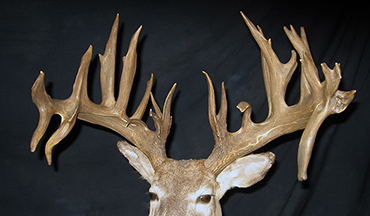 This buck shot in 1967 never received all the attention its massive rack deserved.
