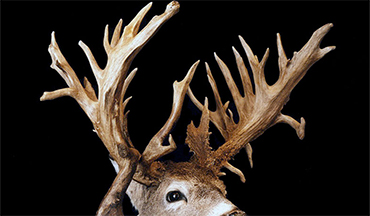 This buck missed out on the fanfare it deserved for its 43 points and heavy mass.