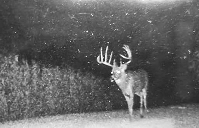 nighttime trail cam photo of Wisconsin record buck