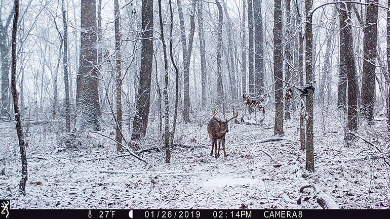 trail cam photo of buck in snow