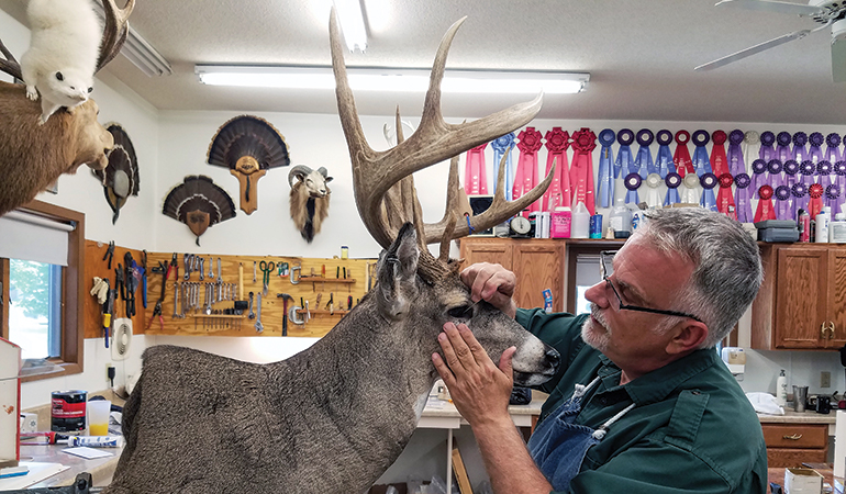 Woods to Wall: Key Considerations for Whitetail Taxidermy