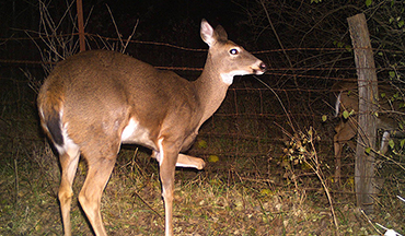 An Iowa hunter has been keeping tabs on this unique doe for years.