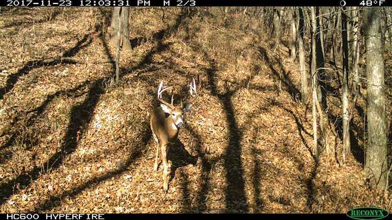 2017 trail cam photo of Wirsig buck
