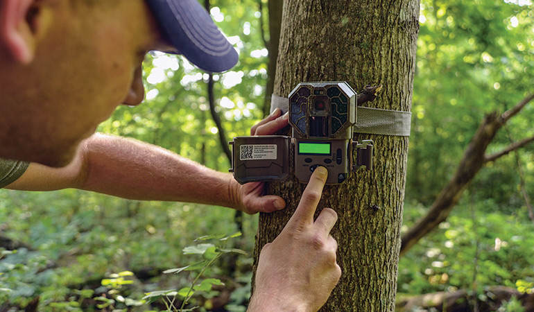The Best Summer Trail Camera Strategy