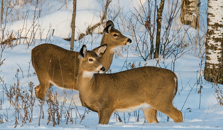 Should You Fill All Your Doe Tags?