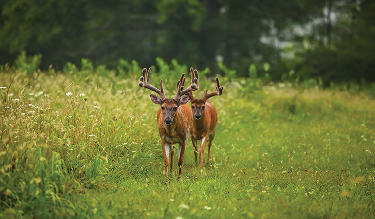 3 Types of Late-Summer Bucks & How to Hunt Them