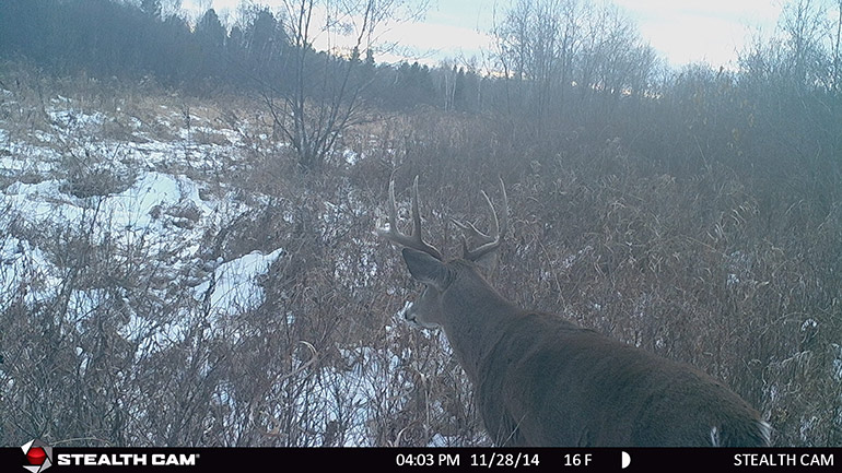 trail cam photo of whitetail buck in the snow