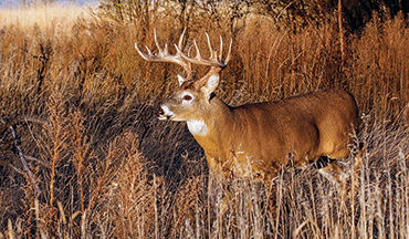 Here's how to tweak these habitats for maximum benefit during deer season.