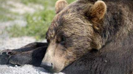Get the 2014-2015 bow, muzzleloader, firearm, and youth hunting season dates for bear hunting.