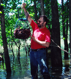A fisherman gathers crayfish from shallow flooded woods for catfish bait. (Keith Sutton photo)