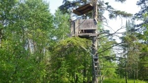 10 Tips for Using Tree Stands