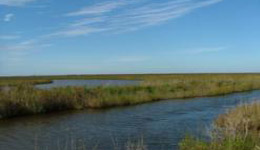 Ducks Unlimited looks forward to working with the Administration to implement its plan to streamline and coordinate restoration efforts along the Gulf Coast.