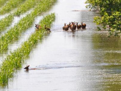 Flooded field. Photo courtesy Louisiana Dept. of Wildlife and Fisheries.