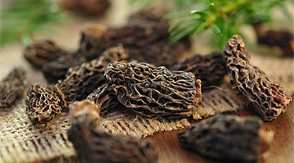 Follow these tips on how to dry morel mushrooms using a dehydrator or an oven.