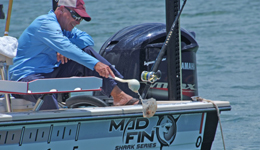 Anglers hook, release sharks for points in Madfin Shark Tournament.  Slow action highlighted by early morning and late afternoon bites.
