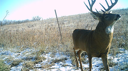 One of the most valuable tools for a deer hunter in the last decade has been the trail camera.