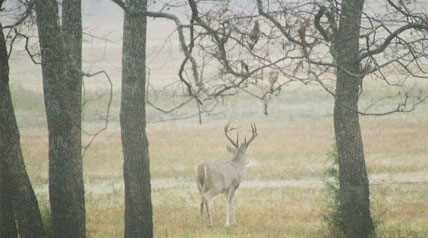 Roughly 31 percent of its 725,000 deer were harvested last year, aided by a whopping three months of firearms season – four and a half months in some parts of the state. And in some areas firearms season starts in August!