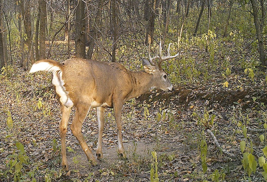 Ten Factors to Ponder When Choosing Pre-Rut Hunting Stands