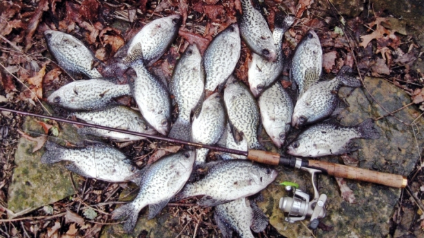 Spring Crappie Fishing in Kentucky