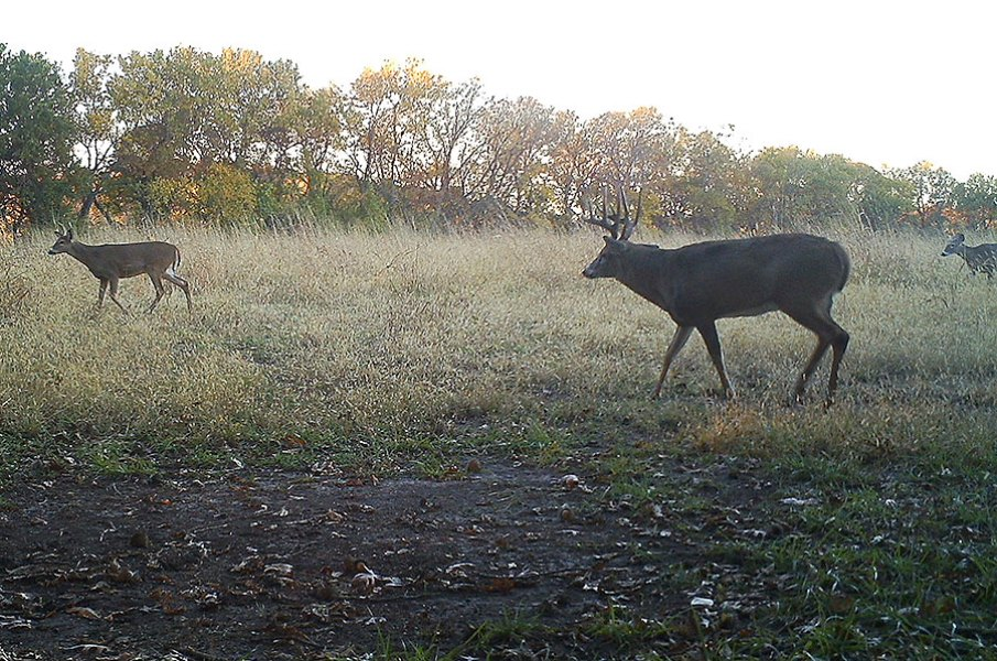 Strategies for Big, Aggressive Bucks