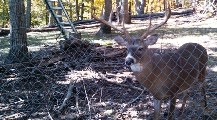 Julius Dunsmore, a resident of Marshall County, has been charged with illegally possessing seven deer, one of which attacked and severely injured him last week.