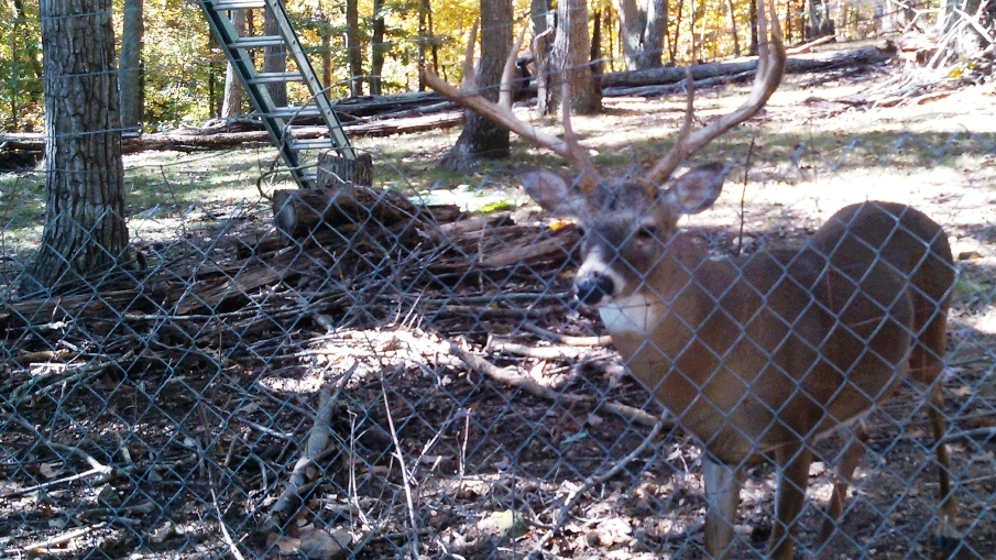 Man Attacked by Deer, Charged with Illegal Possession