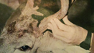 Hunter-Ed Applicant Fails to 'Watch' for Photo of Illegal Deer