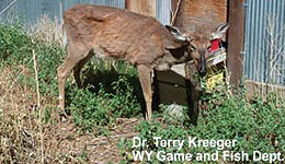 Statement From North Carolina WRC About Euthanizing Deer