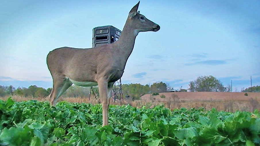Use Early-Season Doe Harvests to Sharpen Bowhunting Skills