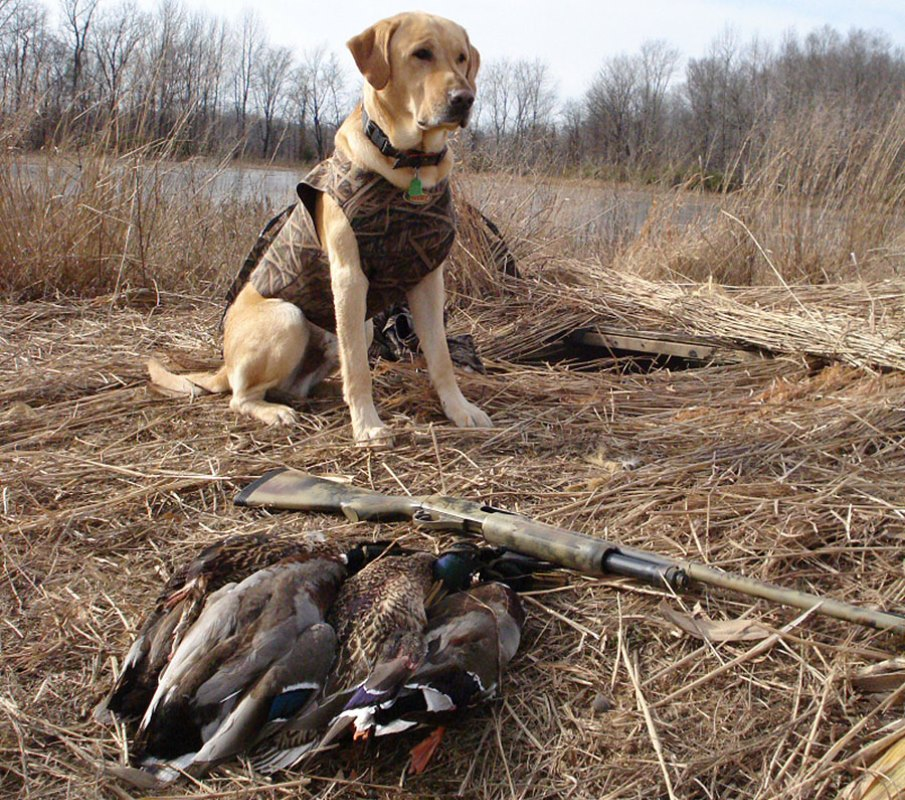 Waterfowl Seasons in Kentucky Look Promising