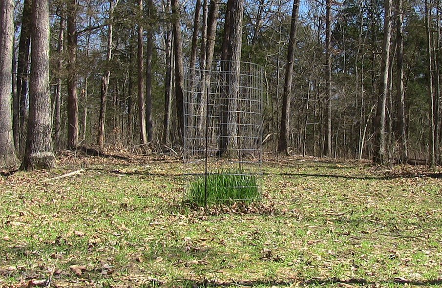 Did Your Food Plot Really Fail?