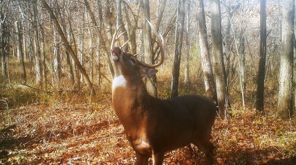 For many areas of the whitetail's range, there isn't a more magical time to be in the woods than November.