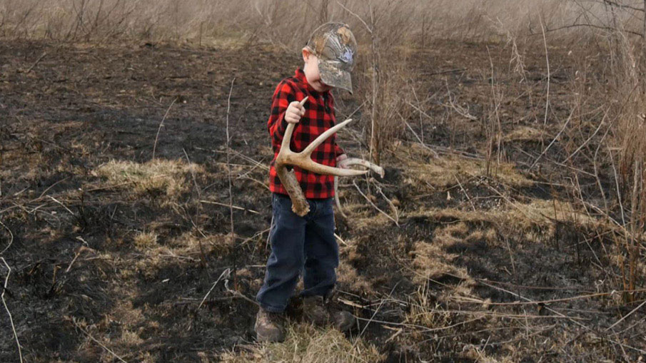 Strategic White-tailed Deer Shed Hunting Tips