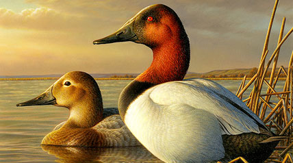 Canvasbacks took center stage last Friday, June 27, for hunters, conservationists and stamp collectors as the new Federal Duck Stamp went on sale.