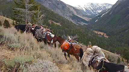 For a hunter, there's an incomparable thrill in riding a horse into elk country. It's the classic image of the ultimate sporting adventure.