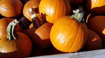 Skip the canned pumpkin and try making some pumpkin puree from scratch for a fresher taste.