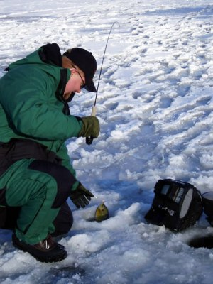 Plop and Hover when Ice Fishing to Catch More Gills