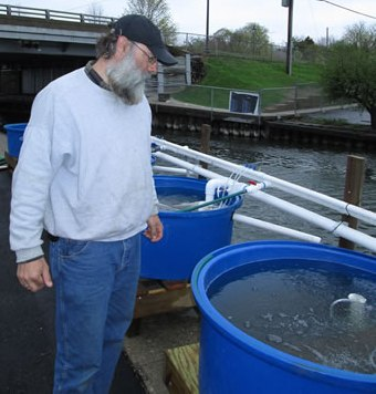 Brian Simon checking the fry holding tanks located in the Abbet Harbor.