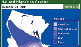 Every week, over 100 biologists, wildlife managers and other experts rank the progress of mallard migration in their areas. We compile their data to bring you a map showing the status of the mallard migration.
