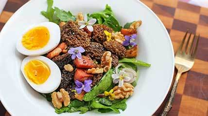 This colorful and protein-rich recipe mixes morel mushrooms, bacon and duck eggs into a fresh green salad.