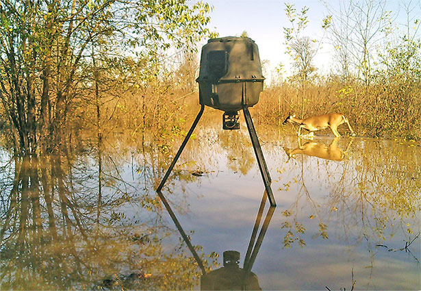 moultrie deer feeder deer in water